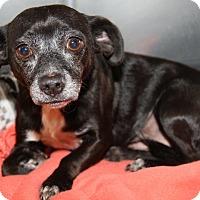 Adopt A Pet :: Ozzie - Orland Park, IL