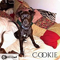 Adopt A Pet :: Cookie - DeForest, WI