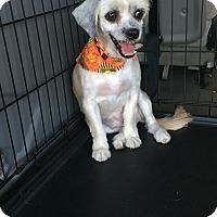 Adopt A Pet :: Phoebe - Jacksonville, TX