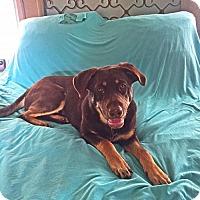 Adopt A Pet :: Maggie - Albertville, MN
