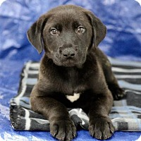 Adopt A Pet :: Brad - Picayune, MS