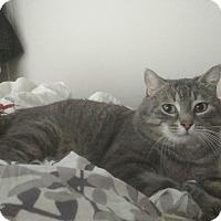Adopt A Pet :: Ravioli - THORNHILL, ON