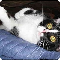 Adopt A Pet :: Emmie kitty - Cincinnati, OH