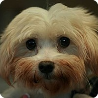 Adopt A Pet :: Finney - Canoga Park, CA