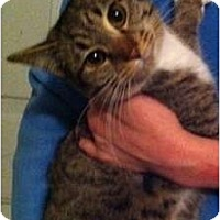 Adopt A Pet :: Miss - Simpsonville, SC