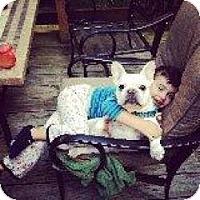 Adopt A Pet :: Shaymis - Mahopac, NY