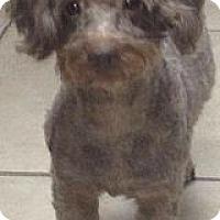 Adopt A Pet :: Kahlua - MAIDEN, NC