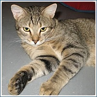 Adopt A Pet :: Ian - Midway City, CA