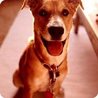 Adopt A Pet :: zzz - Cody - Rancho Santa Margarita, CA
