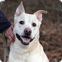 Adopt A Pet :: Baja - Tinton Falls, NJ