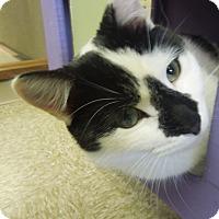 Adopt A Pet :: Emmitt - Medina, OH