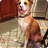 Adopt A Pet :: A285371 Lucky - San Antonio, TX