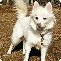 Adopt A Pet :: Bugsy - Canterbury, CT