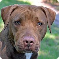 Adopt A Pet :: Maka - Englewood, FL