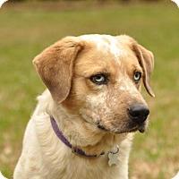 Adopt A Pet :: Whiskey - San Antonio, TX