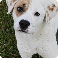 Adopt A Pet :: Jane - Las Vegas, NV
