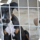 Adopt A Pet :: Mitch