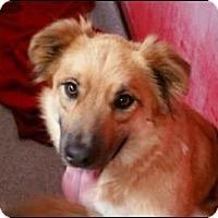 Adopt A Pet :: Gunner - Sunnyvale, CA