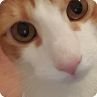 Adopt A Pet :: Arty - Hallandale, FL