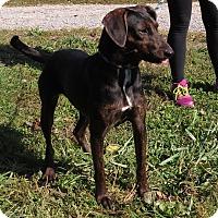 Labrador Retriever/Hound (Unknown Type) Mix Dog for adoption in Unionville, Pennsylvania - MaryAnn
