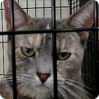Adopt A Pet :: Gracie - Yuba City, CA