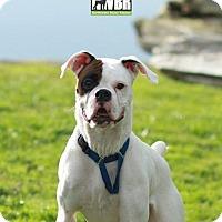 Adopt A Pet :: Charlotte - Woodinville, WA