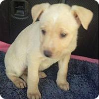 Adopt A Pet :: Daphne - Dana Point, CA