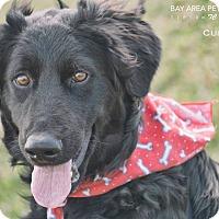 Adopt A Pet :: Curly - San Leon, TX