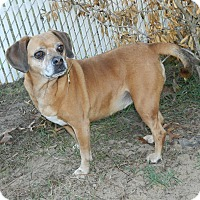 Adopt A Pet :: Bailey - Umatilla, FL