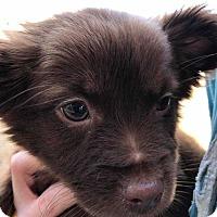 Adopt A Pet :: Bear - Disney, OK