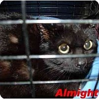 Adopt A Pet :: almighty - Hawk Springs, WY