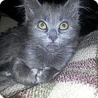 Adopt A Pet :: Salsa - Clearfield, UT