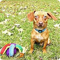 Adopt A Pet :: Pan = FUN! - Mocksville, NC