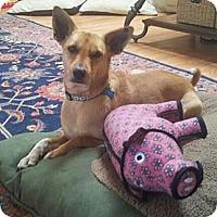 Adopt A Pet :: Finnegan - San Francisco, CA