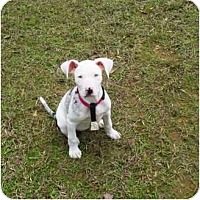 Adopt A Pet :: Briony - Richmond, VA