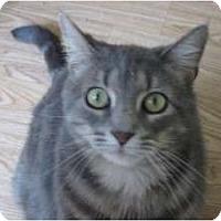 Adopt A Pet :: Misha - Huffman, TX