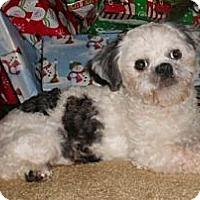 Adopt A Pet :: Opie - Mooy, AL
