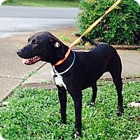 Adopt A Pet :: Romey - Hixson, TN