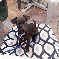 Adopt A Pet :: Lilly - Scottsdale, AZ
