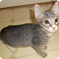Adopt A Pet :: George - Chattanooga, TN