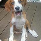 Adopt A Pet :: Madi/Madison