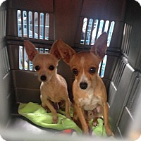 Adopt A Pet :: Taco and Rico - Pompton Lakes, NJ