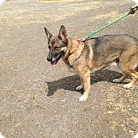 Adopt A Pet :: Max - Bellingham, WA
