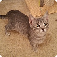 Adopt A Pet :: Willow - Turnersville, NJ