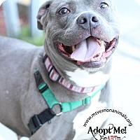 Adopt A Pet :: Infinity - Mt Vernon, NY
