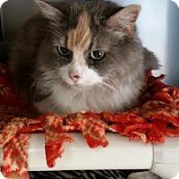 Domestic Longhair Cat for adoption in Chippewa Falls, Wisconsin - Monstar