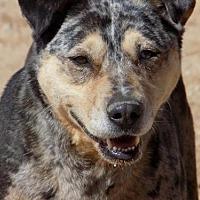 Adopt A Pet :: Diva - Apple Valley, CA