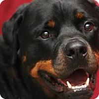 Adopt A Pet :: Gunner - Mason, MI