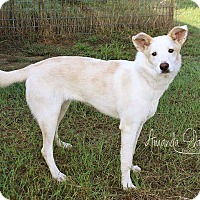 Adopt A Pet :: LEXI - Pilot Point, TX