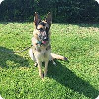 Adopt A Pet :: Zoey - Lisbon, OH